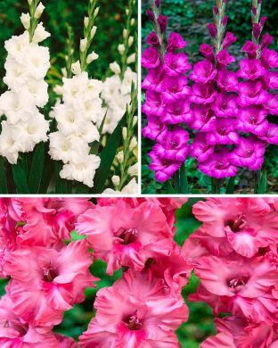 Satumainen-gladioluslajitelma