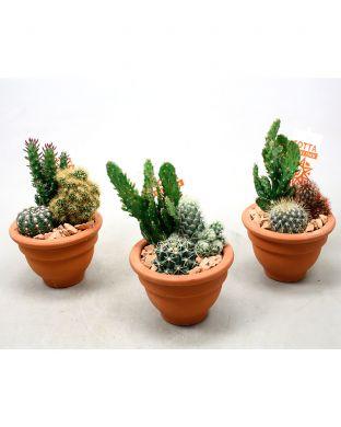 Kaktusasetelma terracotta-ruukussa
