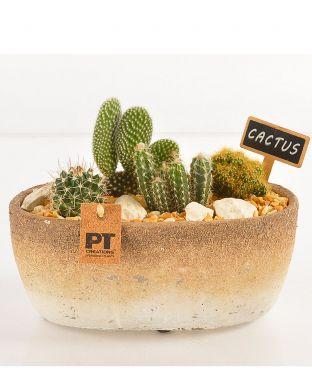 Kaktusasetelma ovaalissa ruukussa