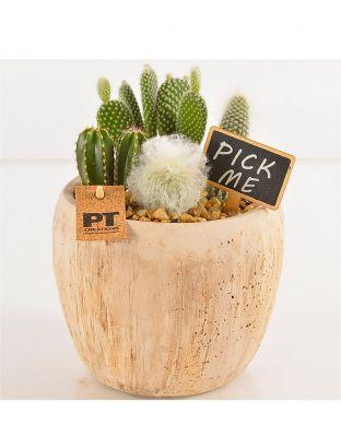 Kaktusasetelma pyöreässä ruukussa