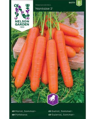 Porkkana Nantaise 2