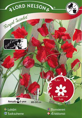 Tuoksuherne Royal Scarlet