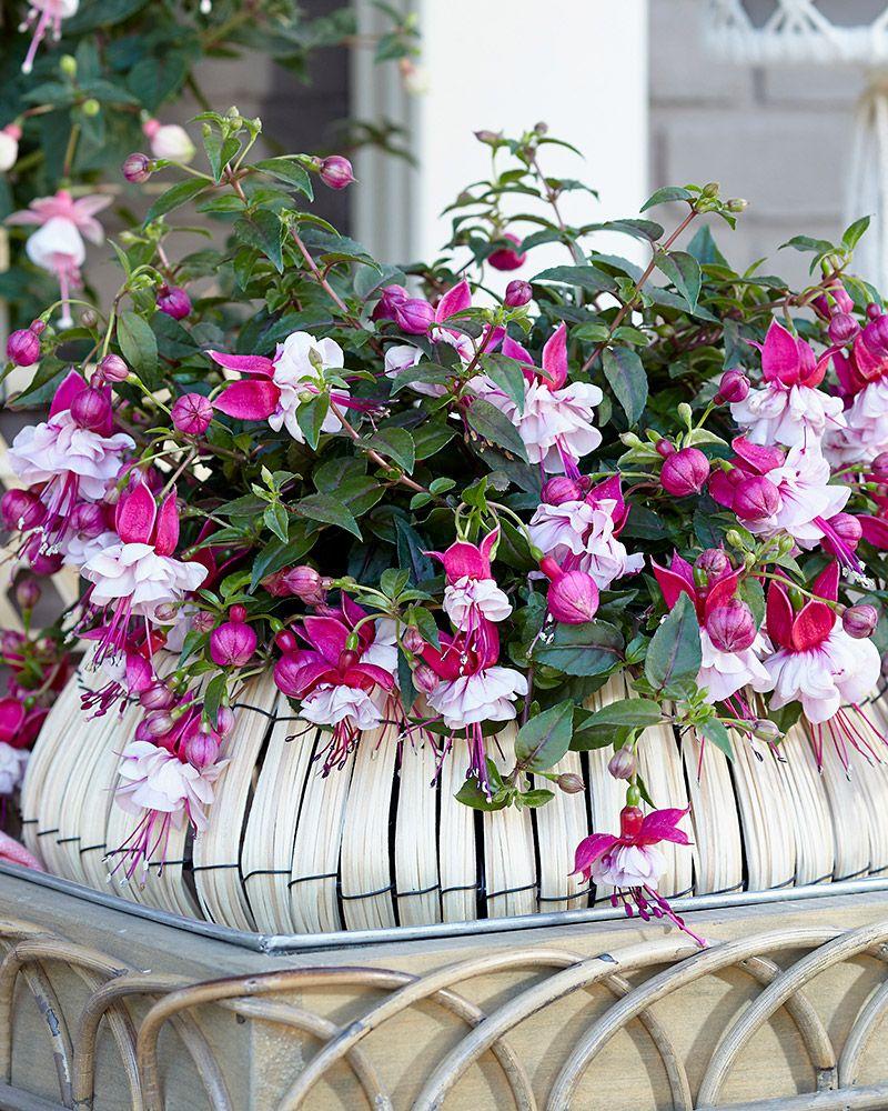 Kukkia kattilaan – pikkutaimista loppukesän kukinta