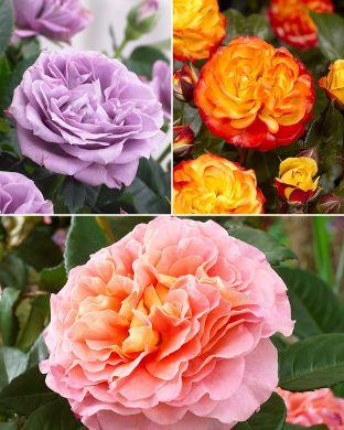 Viherpeukalot-ruusu mix
