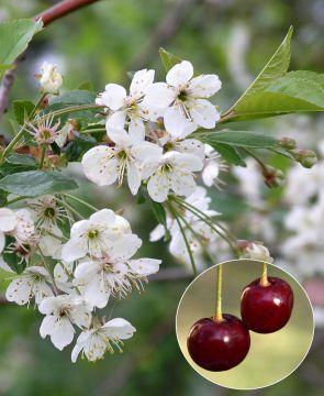 Kirsikka Latvian Matala