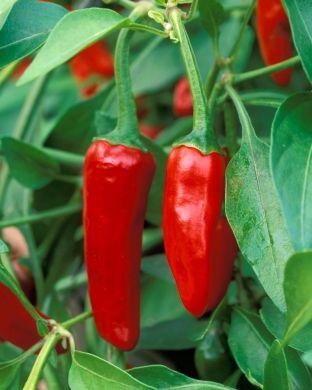 Chilipaprika mix