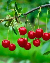 Kirsikka Huvimaja