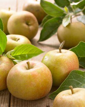 Omenapuu Borgovskoje