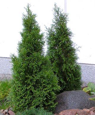 Timanttituija 30-40 cm