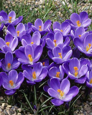 Kevätsahrami Remembrance