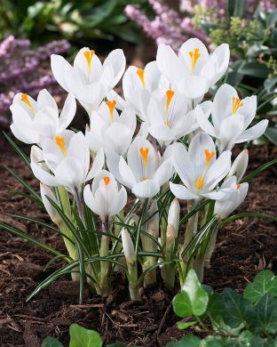 Kevätsahrami Jeanne d´Arc