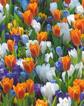 Kevätkarnevaali-lajitelma