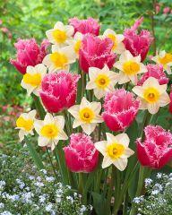 Kevään riemu -lajitelma