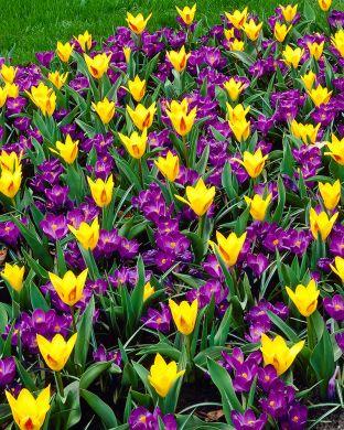 Kevään voima -lajitelma