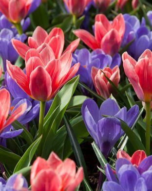 Kevätsointu-lajitelma