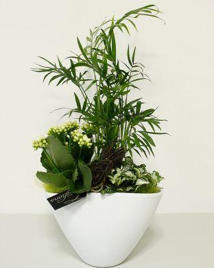 Huonekasviasetelma valkoisessa ruukussa