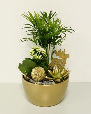 Huonekasviasetelma kultaisessa ruukussa