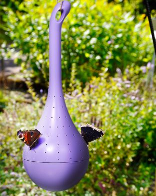 Perhoskeidas Belightful violetti