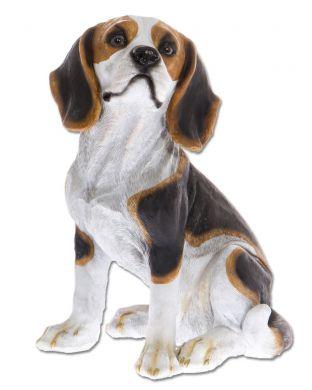 Beagle istuu