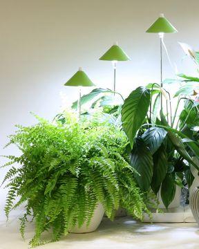 SunLite LED- kasvivalo vihreä