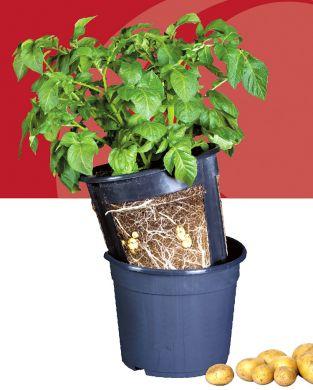 PotatoPot-perunaviljelyruukku