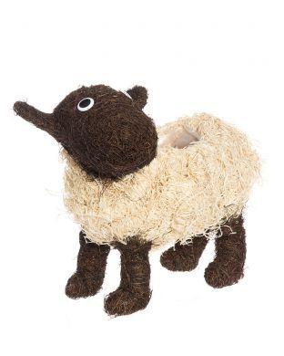 Pajuruukku Lammas