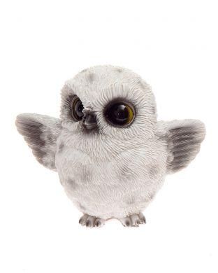 Pöllö valkoinen pieni