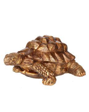 Kilpikonna kultainen iso