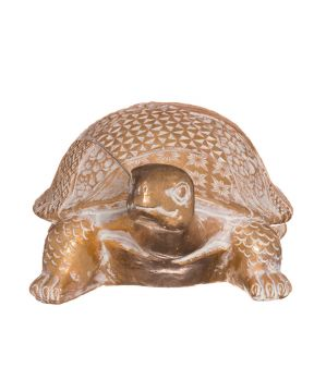 Kilpikonna kultainen pieni