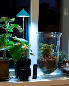 SunLite LED- kasvivalo petroolinsininen